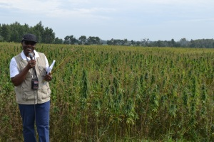 Kwesi in Field of hemp